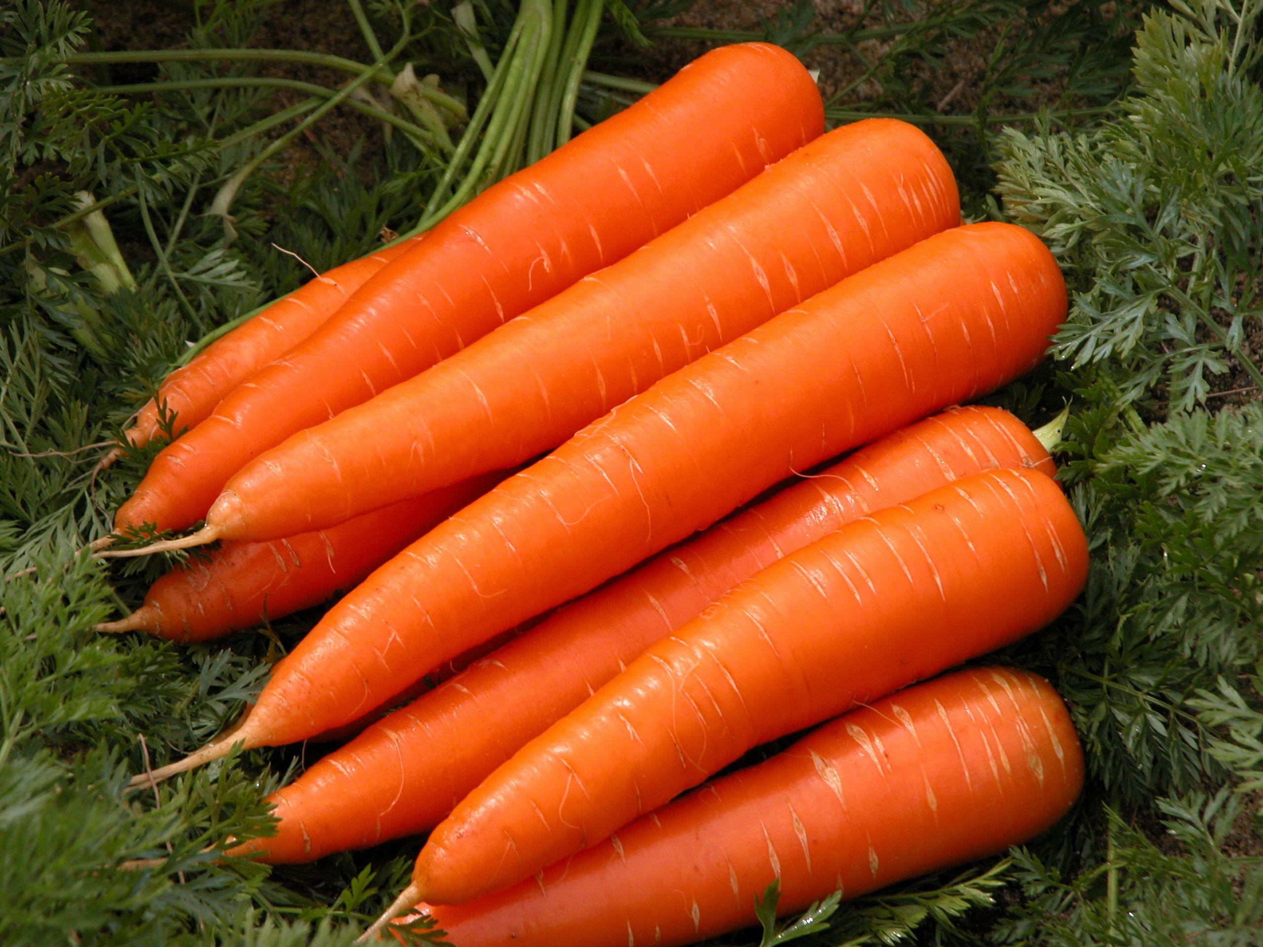 Estudios han demostrado que los riesgos de cáncer en el pancreas de las personas que consumen zanahorias regularmente son mucho menores que en las personas que casi nunca comen este vegetal. El caroteno no sólo protege contra el cáncer, también protege las arterias, el sistema inmunológico y combate las infecciones.