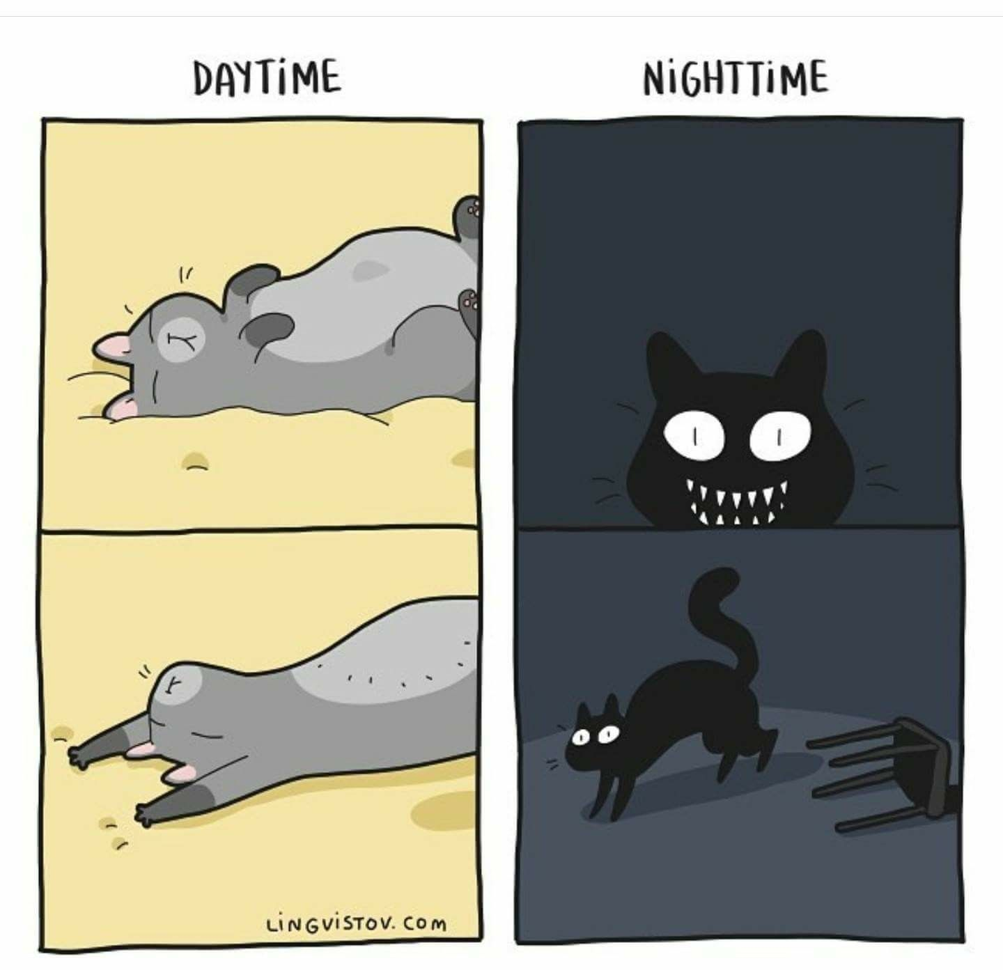 Day Time Night Time Funny Cats I Love Cats Crazy Cats