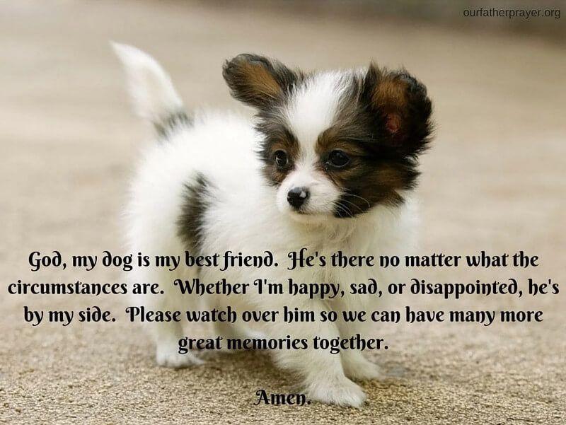 Short Prayer For A Dog Sick Pets Prayer For Sick Dog Pet Quotes Dog