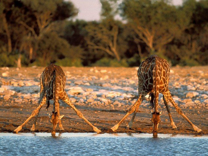 why not a safari in Namibia?