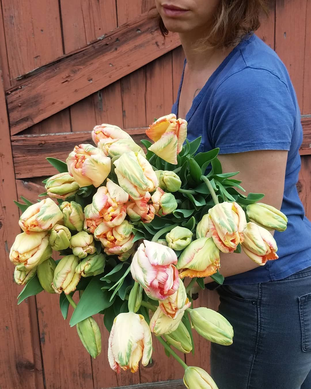 These Are Our Tulips Today >> Some Of Our Apricot Parrot Tulips From The Field This Is Our First