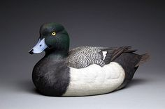 Greater Scaup drake. Carved in Tupelo wood. Acrylic painting. Best of Species Ward World 2012. Best of Class interm. Canadian National 2013. Yves Laurent (b.1955)