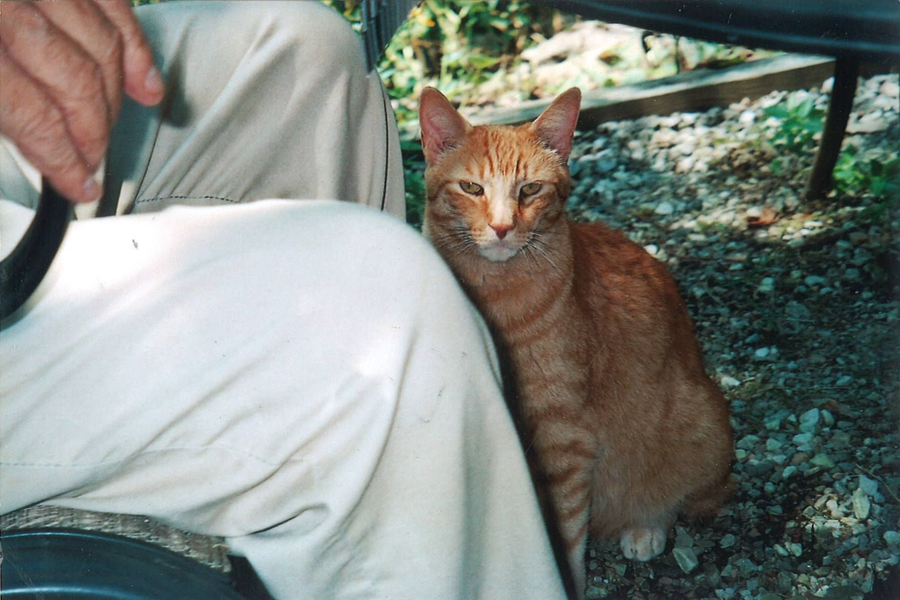 Missing Cat , Edith Lane sighting recently . Orange with