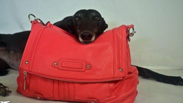 My Best Friend is Whippet Messenger Bag