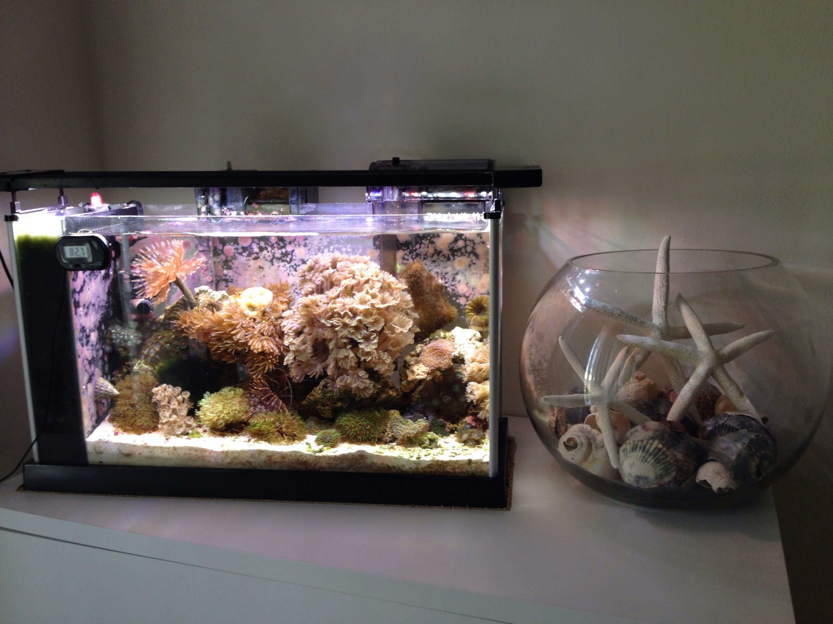 Pico 5 Gal Reef Aquascaping Aquarium Pinterest