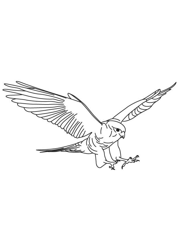 Falcon In Outline Coloring Page Download Free Falcon In Outline