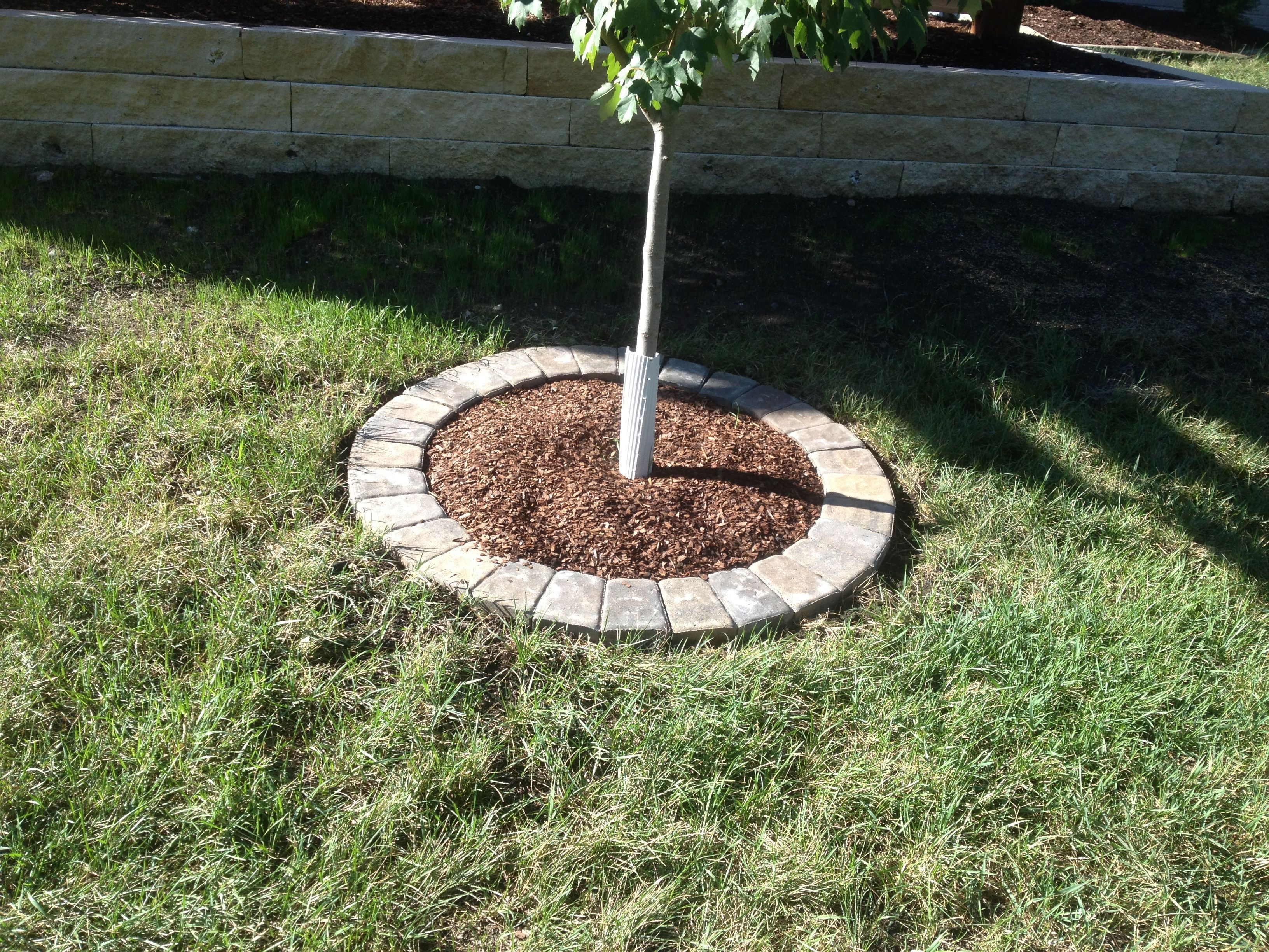 A simple tree ring with circle pavers landscapefrontyardmulch