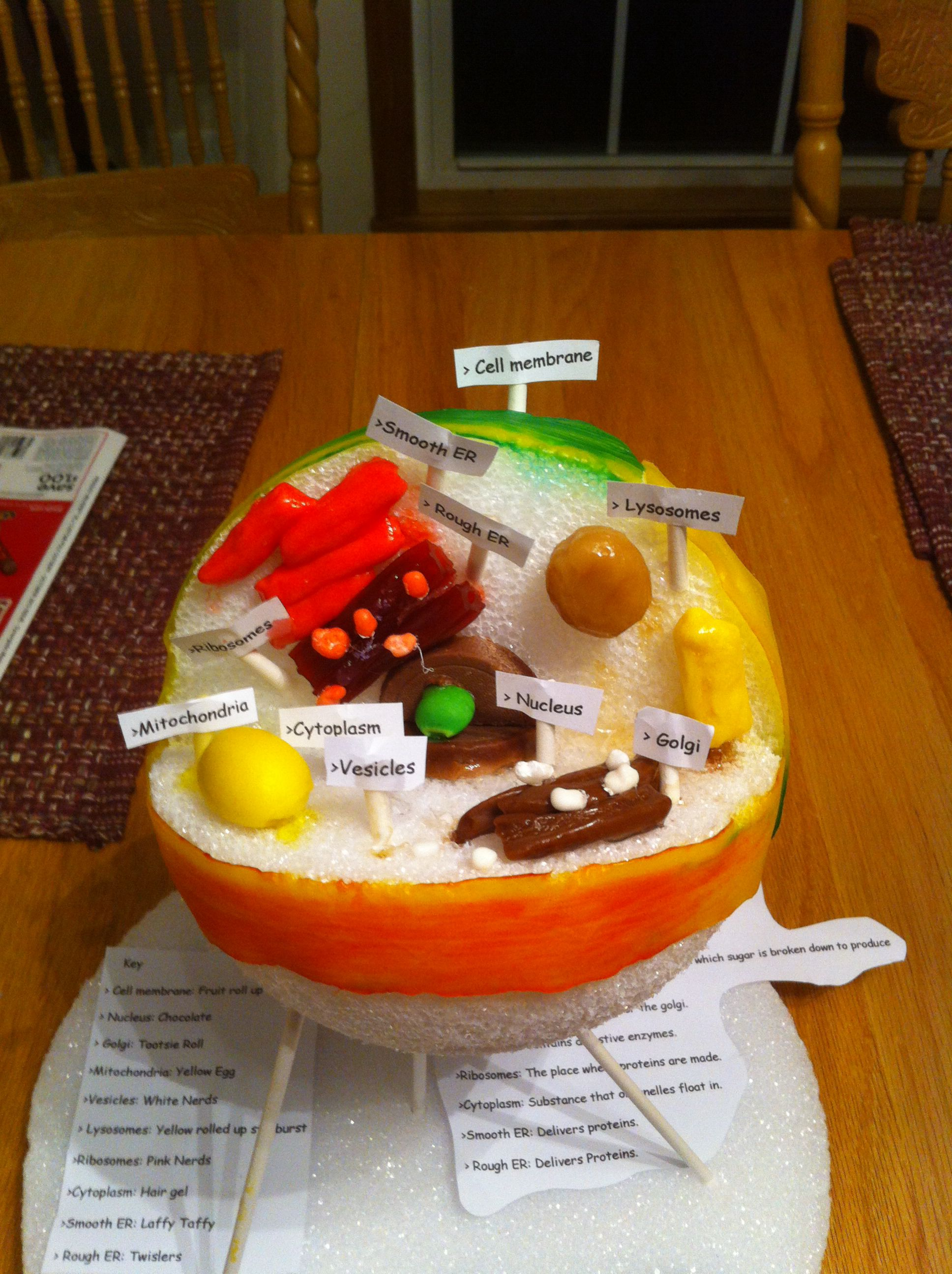 Animal cell project. Easy and awesome. My 12 year old ...
