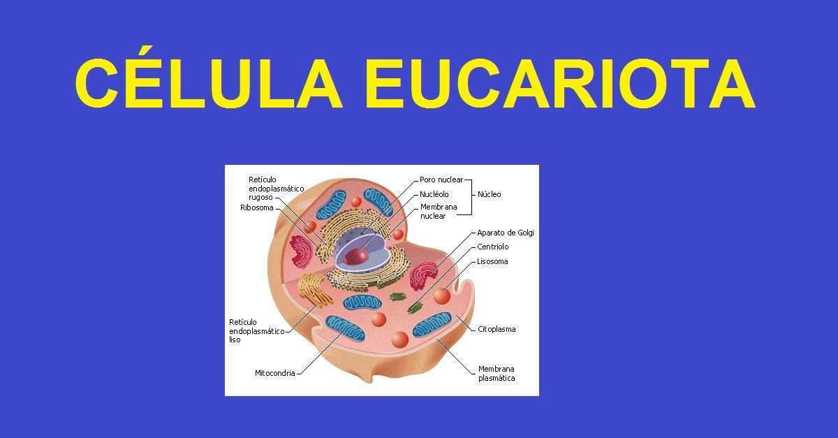 Resultado De Imagen Para Imagenes De La Celula Eucariota Celula Eucariota Eucariota Celulas