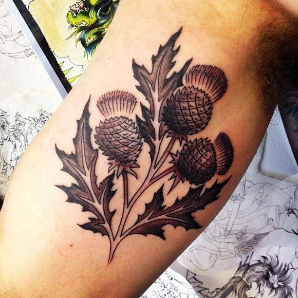 23 Scottish Tattoo Designs Ideas: Scottish Thistle Tattoo By Mijo. #bolderink #mijotattoos
