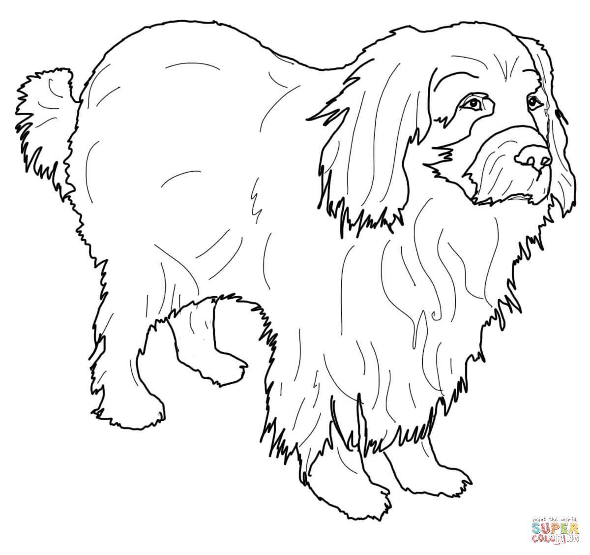 malvorlage hund labrador  tier ausmalbilder