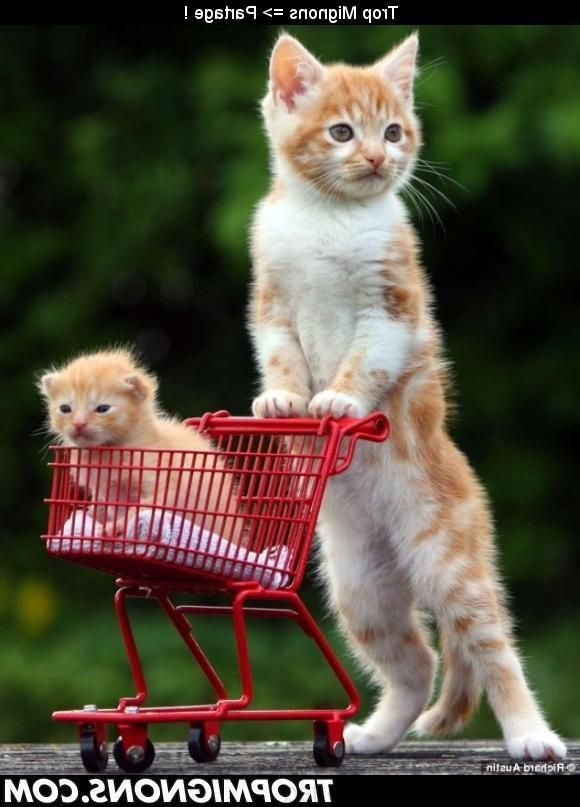 Photo b b chat trop mignon photo bb animaux cats cute animals et silly cats - Photo chat mignon ...