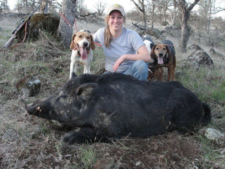 So Much Fun To Hunt With Dogs They Bayed This Pig Around Felt Like For Hrs But I Finally Got The Job Done Pig Hunting Dogs Hog Dog Pig Hunting