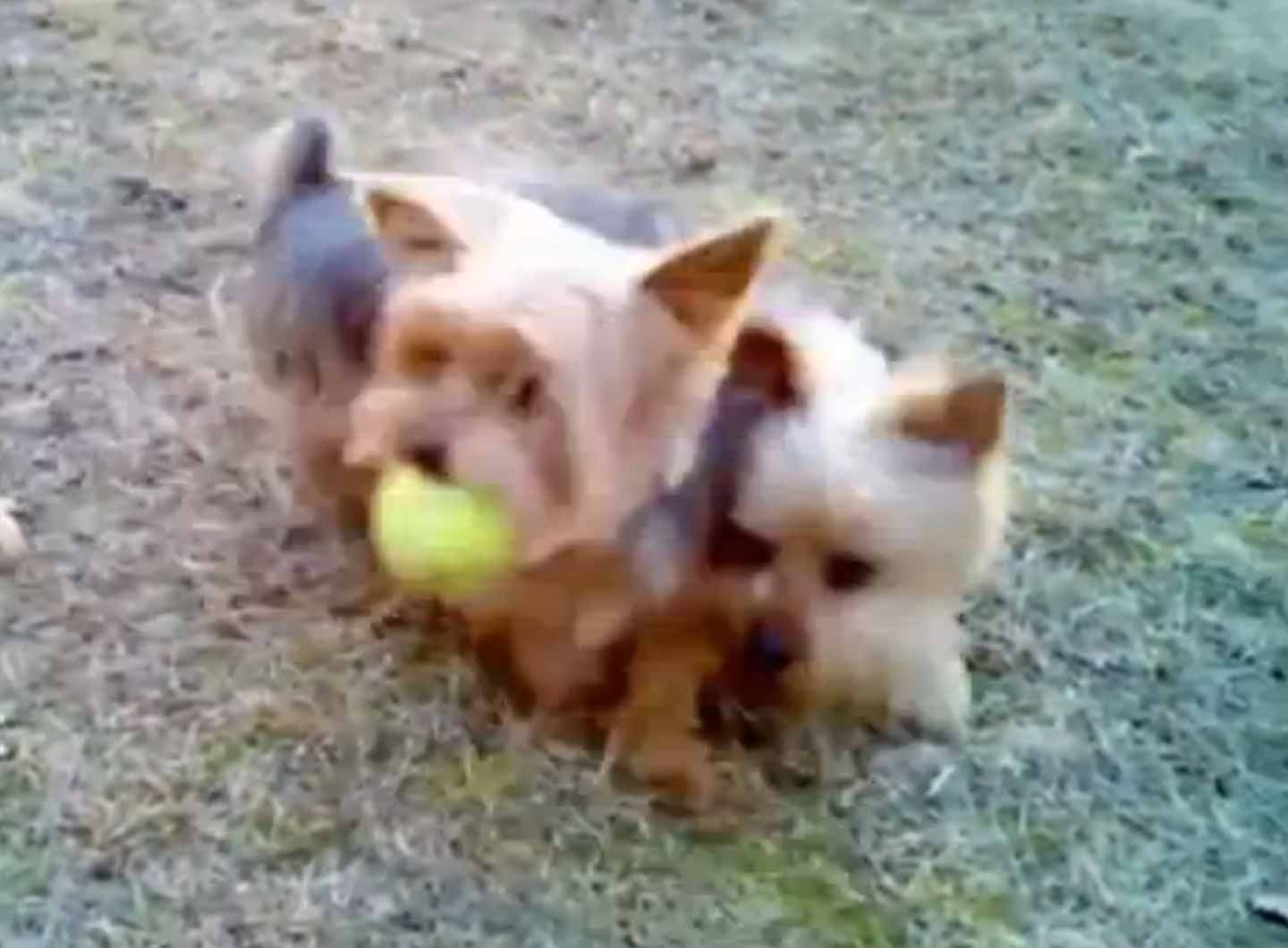 Funny Dogs Video Compilation America S Funniest Home Videos