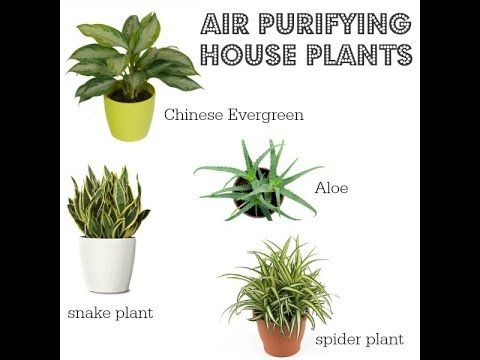 Anti Smog Plant Air Purifier Pollution Control Indoor Plant Plants Spider Plants Indoor Plants