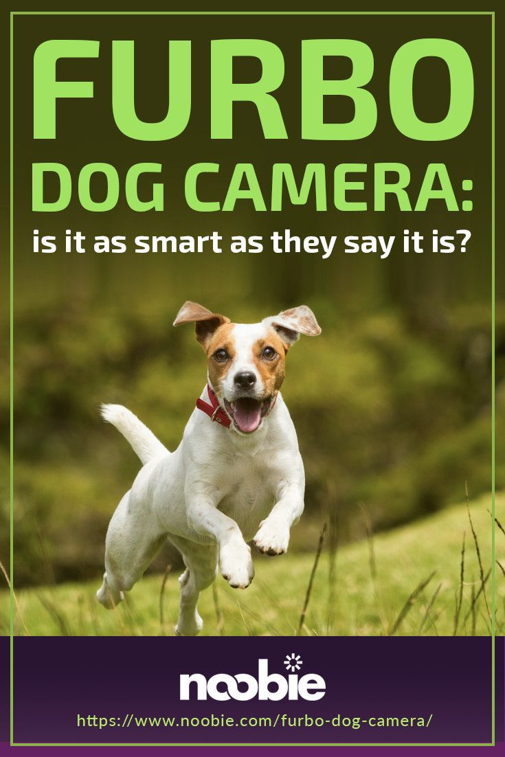 Is The Furbo Dog Camera As Smart As They Say It Is?   Noobie #smartdevice