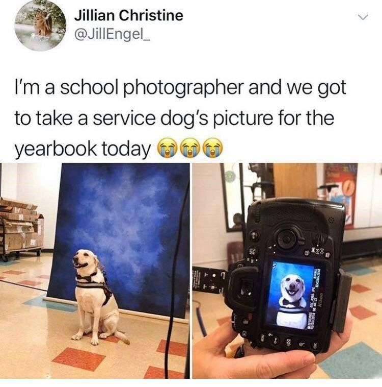 50 Of The Most Loved Doggo Memes Of 2018 Will Make Your