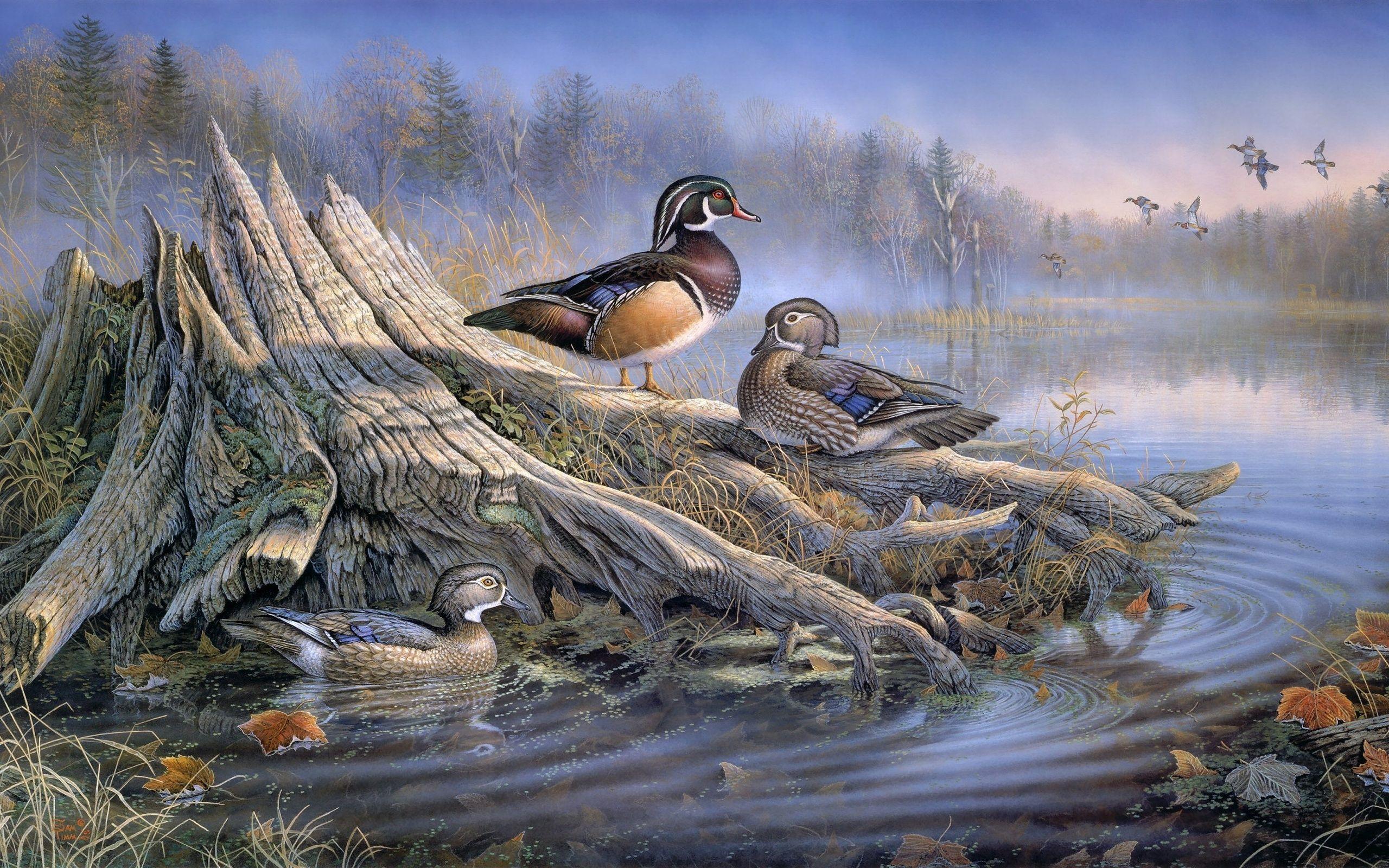 картинки для декупажа утки охота за сокровищами выпуске узнаете