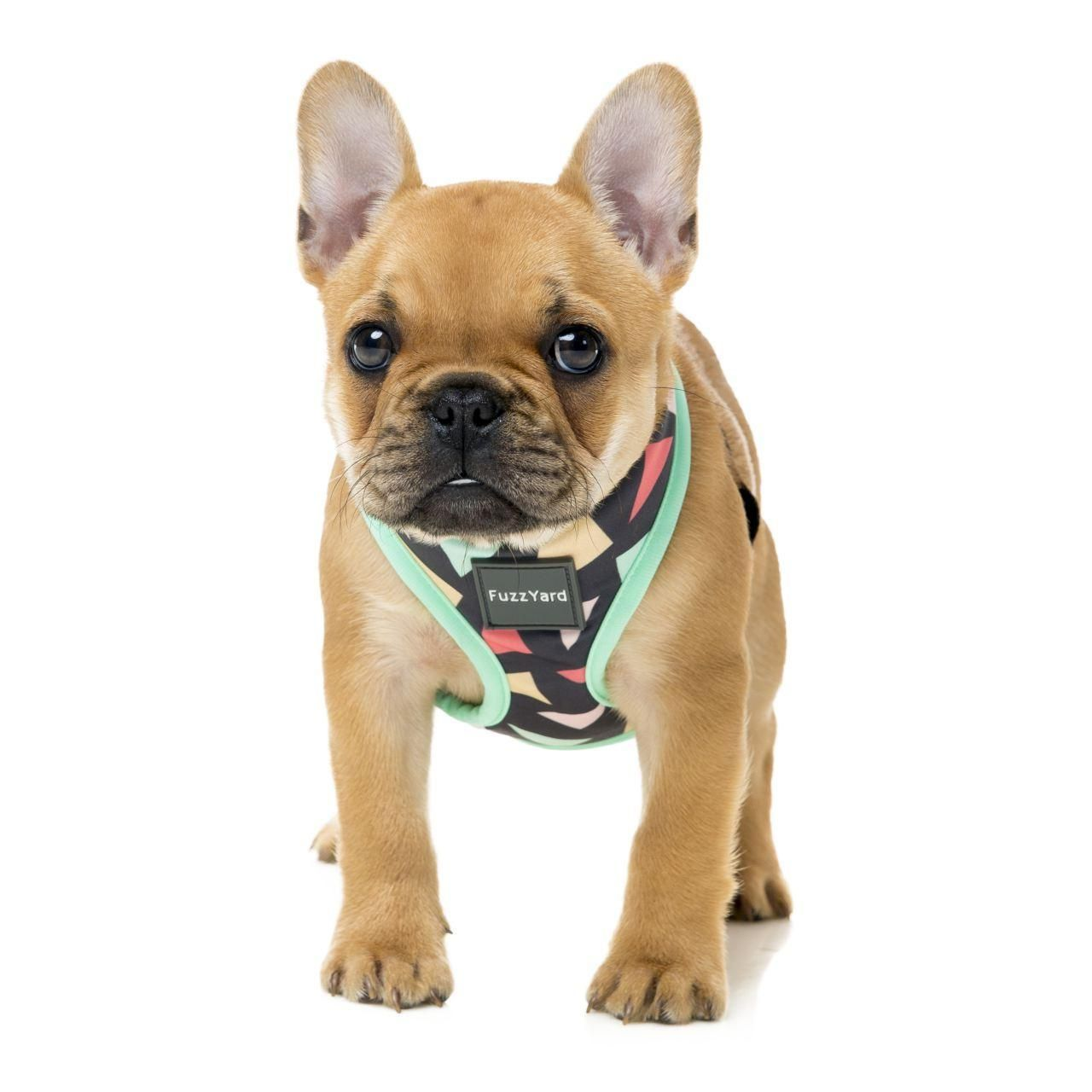 Fuzzyard Rad Dog Harness At Fetch Co Uk The Online Pet Store