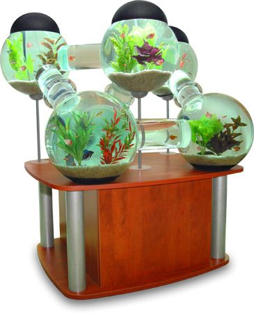 Google image result for for Unique betta fish tanks