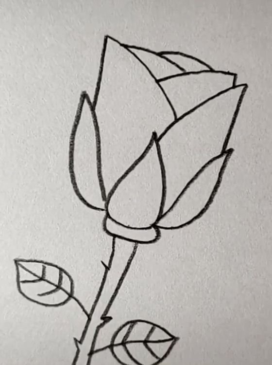 Drawing Rose Easy with A Pencil