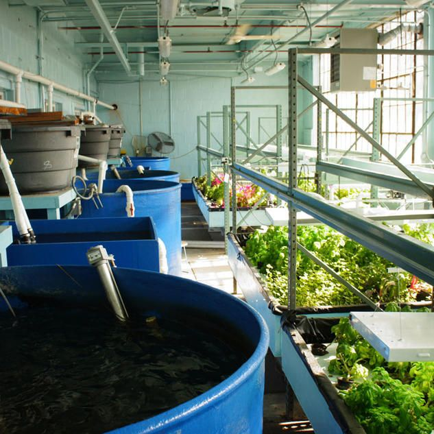 Vertical Farming Chicago: CALIFORNIA URBANISM The Sweetwater Foundation In Chicago