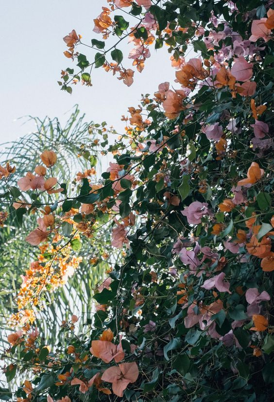 plants of tumblr plantings pinterest plants spring and flowers