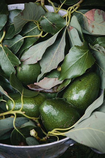 PALTA, O AGUACATE O AVOCADO ... -  Riquísimas para una ensalada, ingrediente principal en un guacamole, con azúcar como postre ... versátil como pocos alimentos, su consistencia cremosa, suave y deliciosa , la hace una de mis grandes preferidas ...