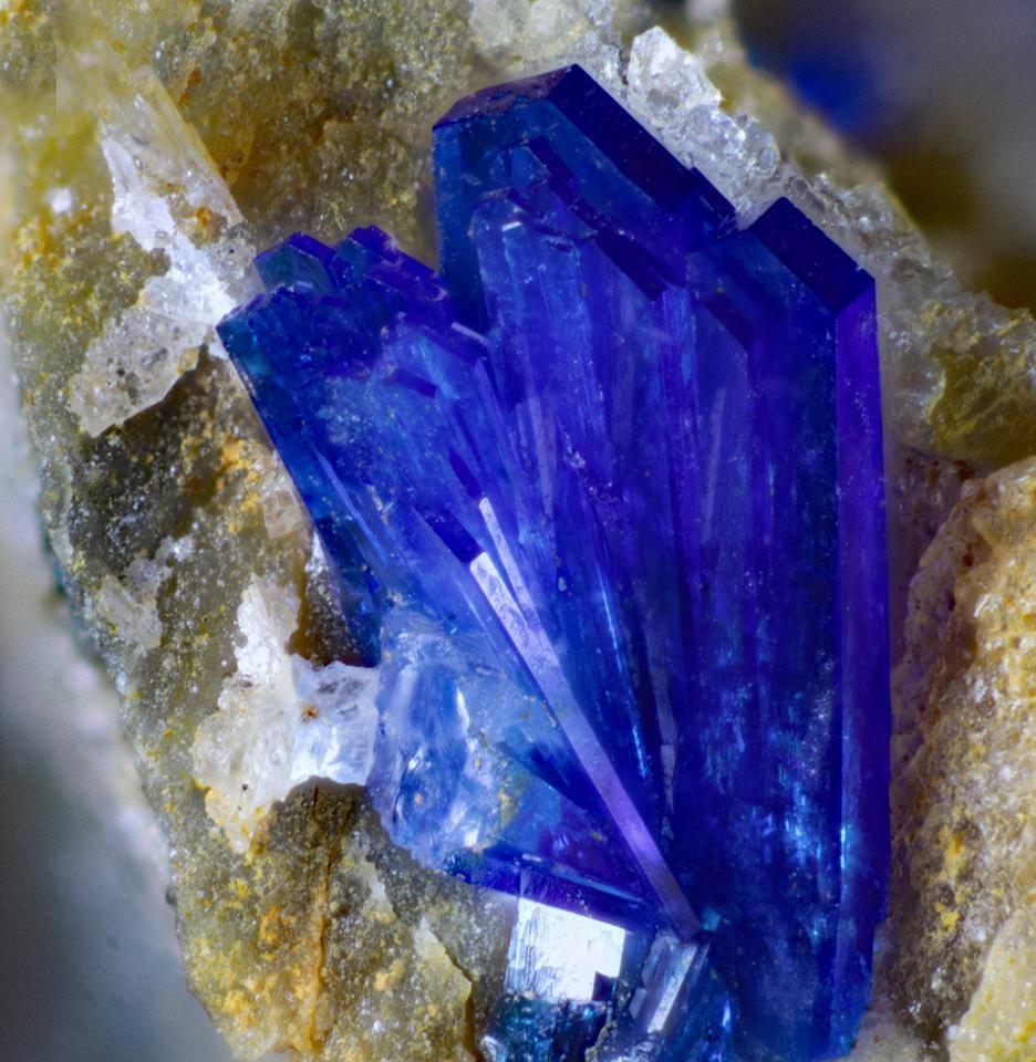 Linarite. Dylife Mine FOV=~3-4 mm Photo Stephen Rust