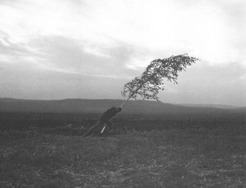 La fontana della vergine, Ingmar Bergman