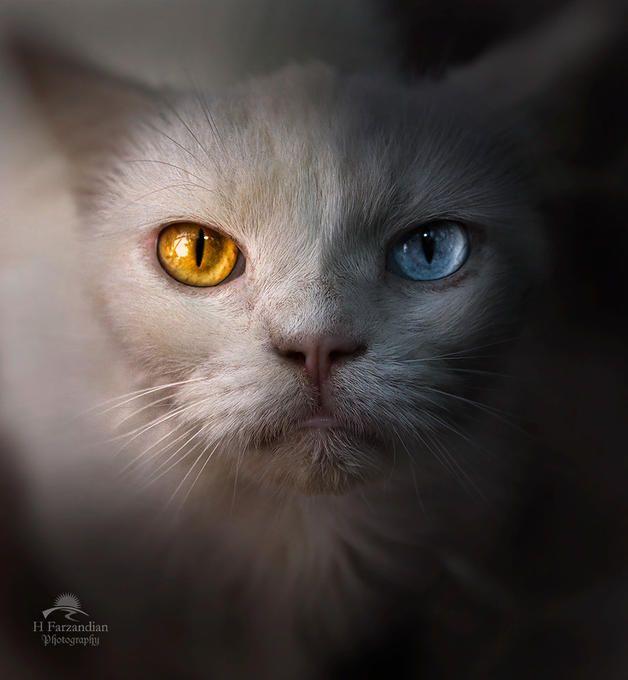 A portrait of life: Photo by Photographer Hamid Reza Farzandian - photo.net
