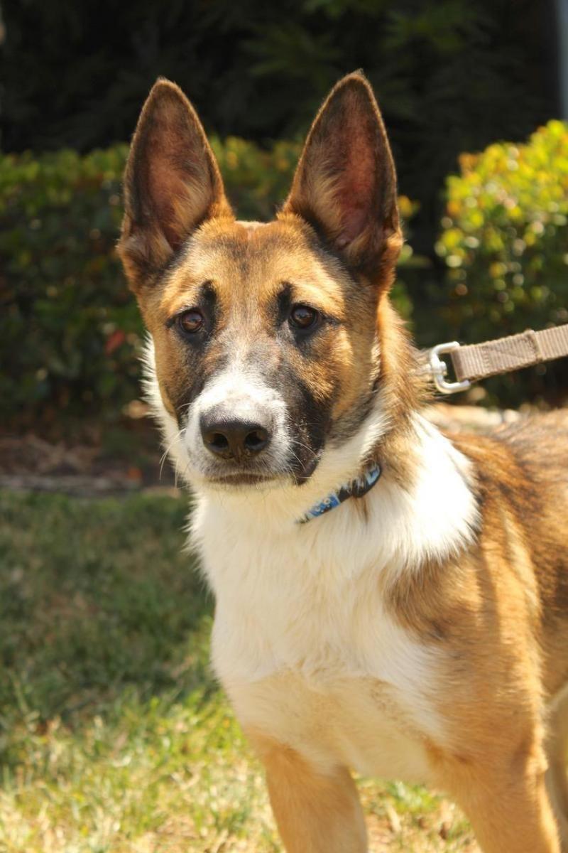 Adopt Yacht On Petfinder Dogs Dog Adoption Shepherd Dog