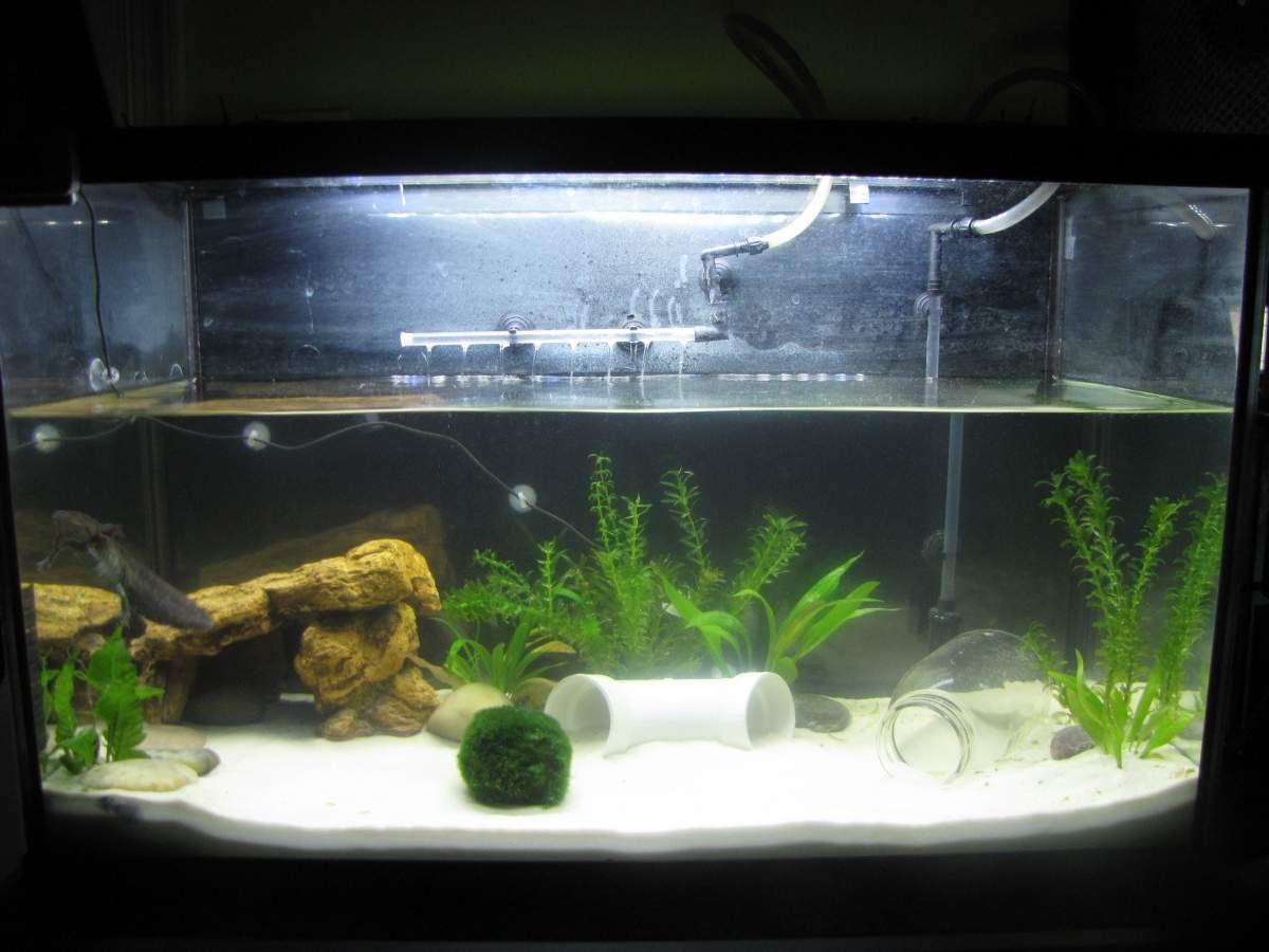 Decoration Aquarium Axolotl : Axies g  aquaryum terraryum