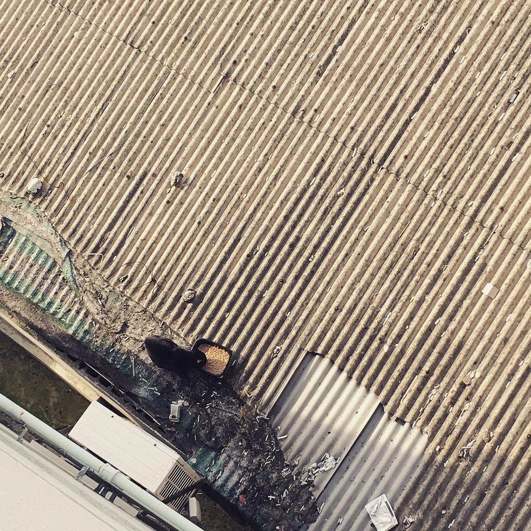 일찍 놔줬더니 일찍왔따!!!!!! 야옹야옹 우는 소리가 들려서 내다봤더니 빼꼼 올려다가보고는 밥을 챱턉챱 맛있게 먹는당 귀요오 - #냥스타그램 #캣스타그램 #길냥이 #야생고양이 #묘스타그램 #아깽이 #고양이스타그램 #길냥스타그램 #밥스타그램 #고양이 #초보집사 #cat #catstagram #pet #petstagram #kitty #cute #neko #nekostagram #meow #streetcat #instacat #캐츠랑 #키튼사료 #길냥이밥 #길냥이사료 #쉐바파우치 #참치 #닭고기 #차오츄루 by elly.k_siri