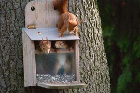 Eichhörnchen Futterkasten: Bauplan & Anleitung