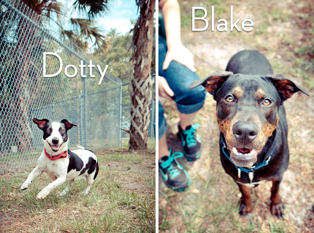 Adoptables from The Humane Society of Sarasota County in