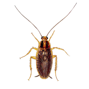 Some Pests Can Infest Homes Year Round And Others Actually Wait Until The Weather Cools Before They Seek Shelter In Your Pest Control Best Pest Control Pests