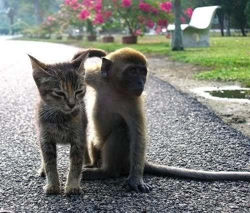 Monkey Cat Love