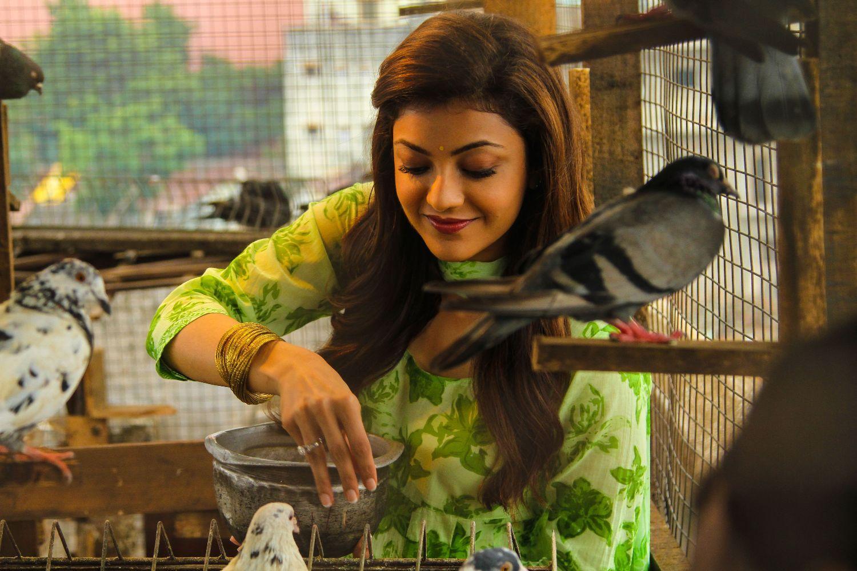 Maari Movie Latest Stills Dhanush Kajal Aggarwal Actress Wallpaper Actresses Movie Photo