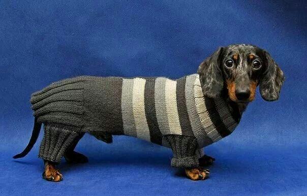 Pin By Donna Tyson On I Love Hot Dogs такса одежда для собак собаки