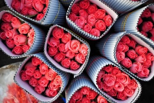Image via We Heart It #art #beautiful #colorful #flower #flowers #photo #photography #picture #pink #pretty #red #roses #summer #wallpaper #wallpapers #spiring