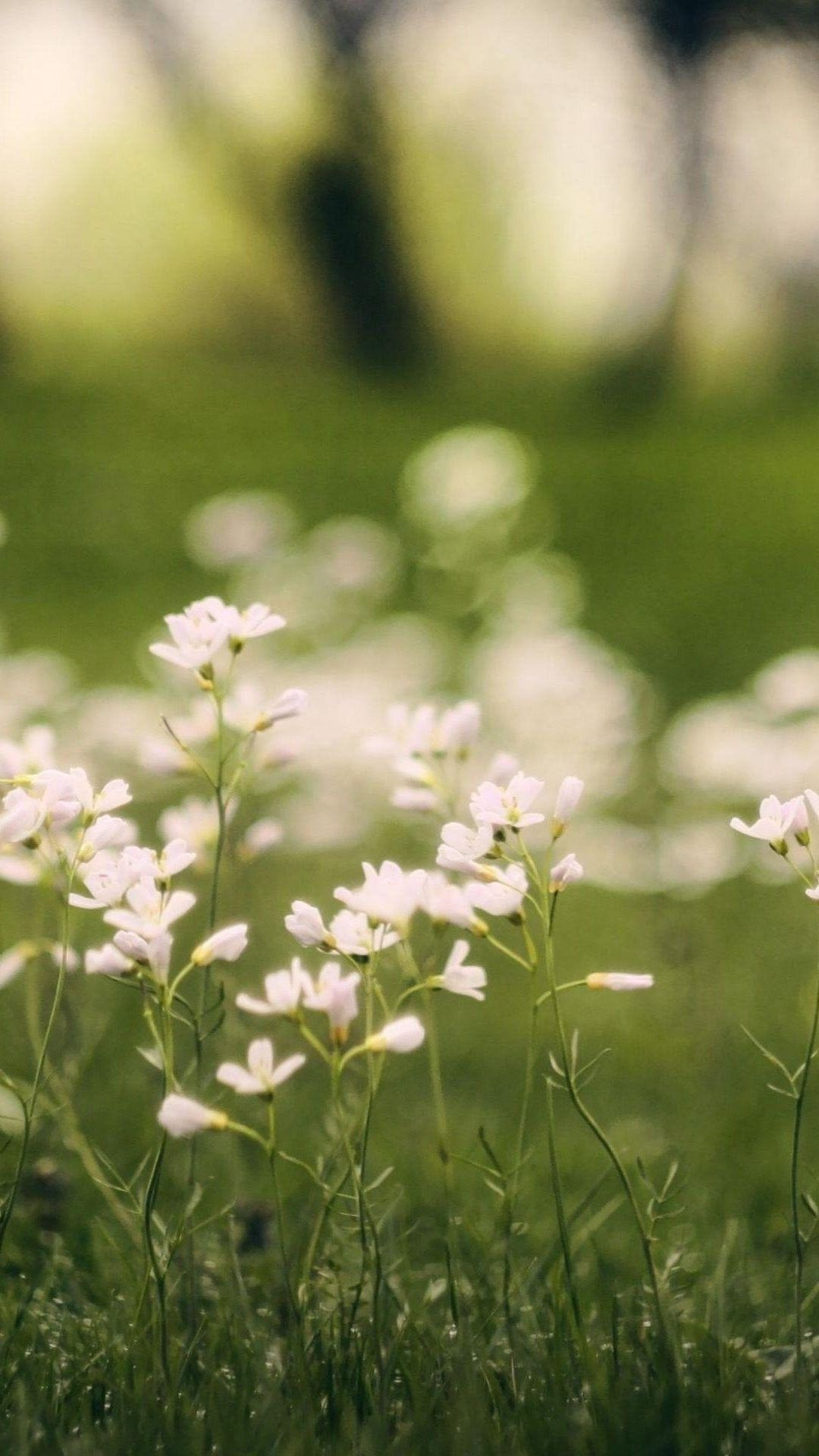 White Small Flowers Bokeh Macro Phone Wallpaper Hd