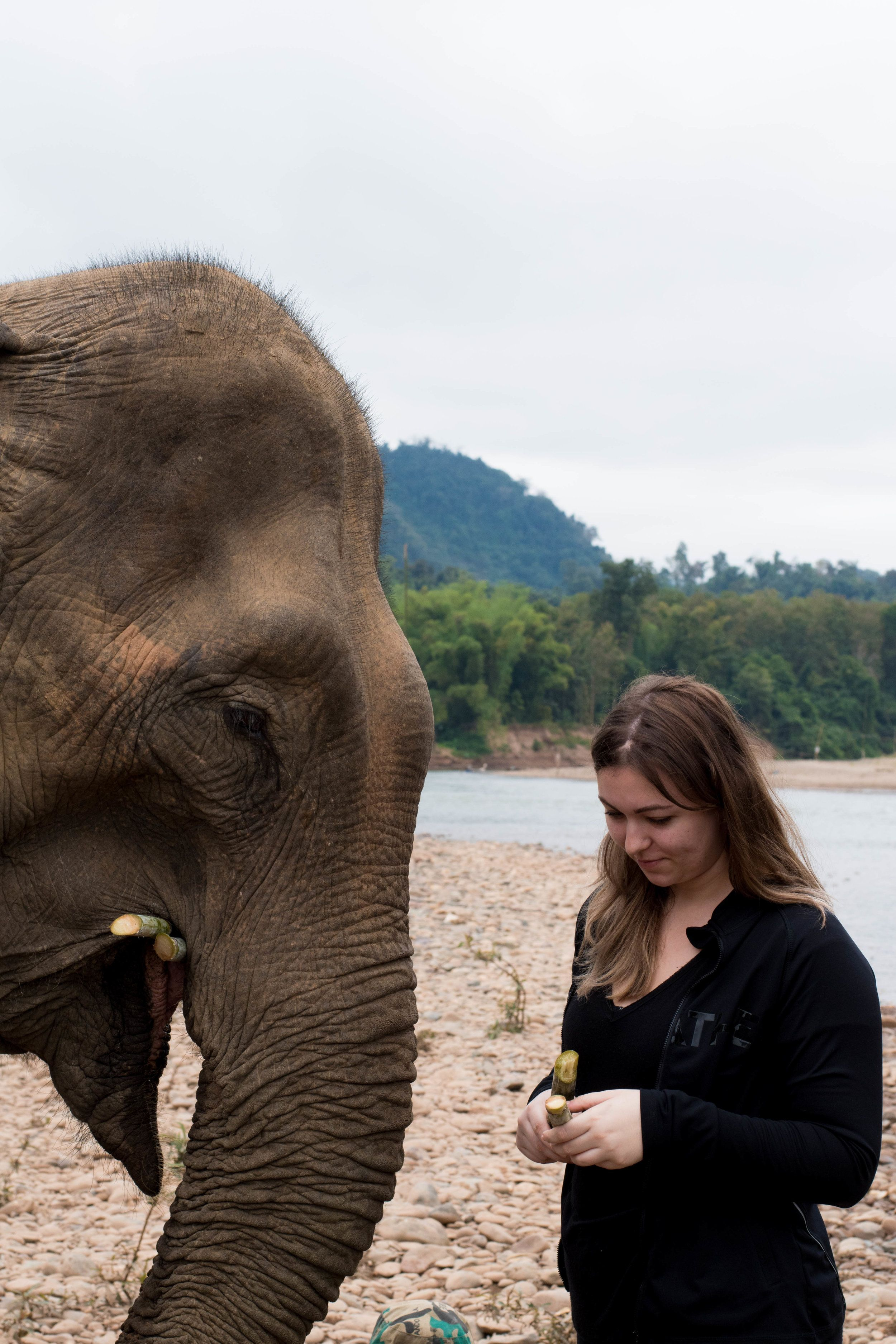 My Experience with Elephants in Laos