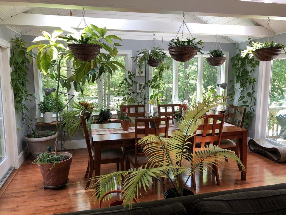 My dining/garden room : gardening | Indoor garden rooms ...