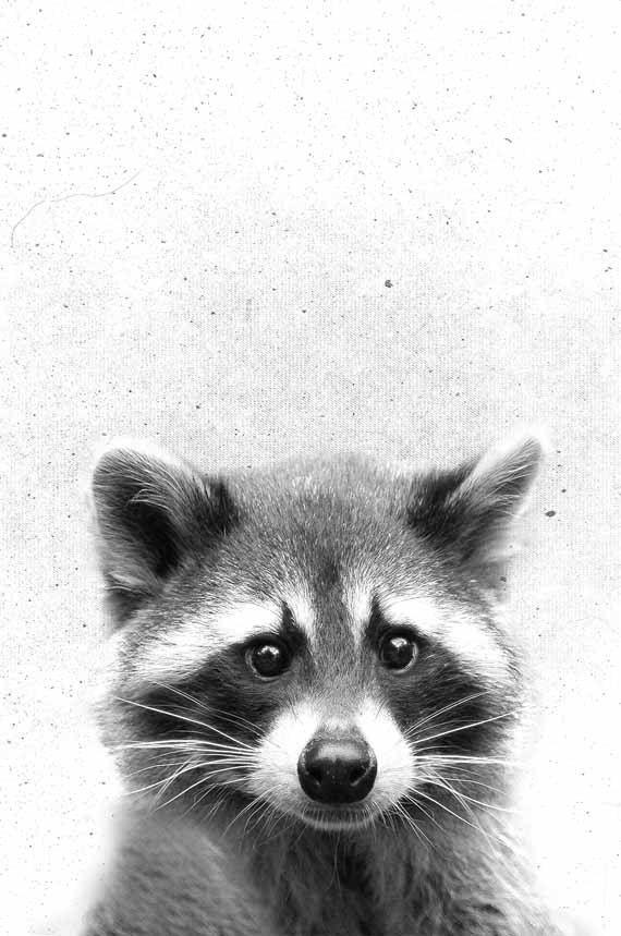 raccoon print baby animals print woodland animals nursery print