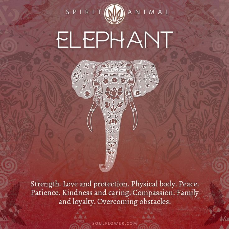 Find Your Spirit Animal - Spirit Animal Meaning Elephant