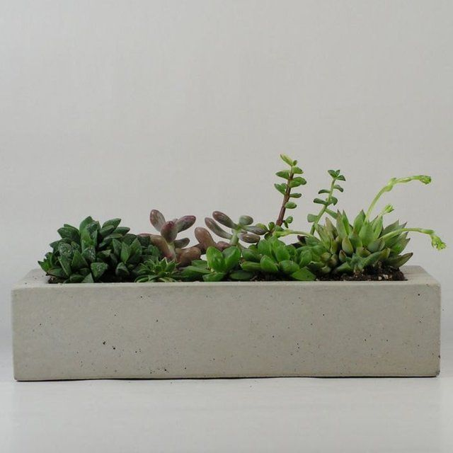 interesting concrete planter. Concrete Tray  Planter by roughfusion on Etsy Join me Fancy Discover amazing stuff collect the things you
