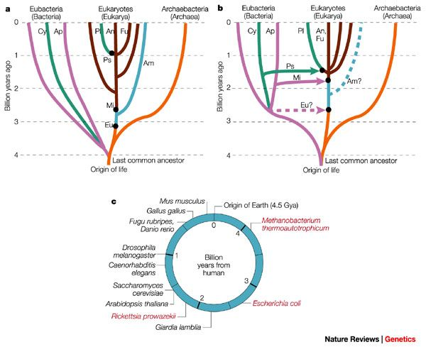 The origin and evolution of model organisms