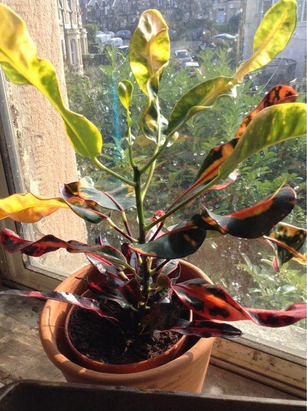 Free Plant Identification Plants, Perennials, House plants