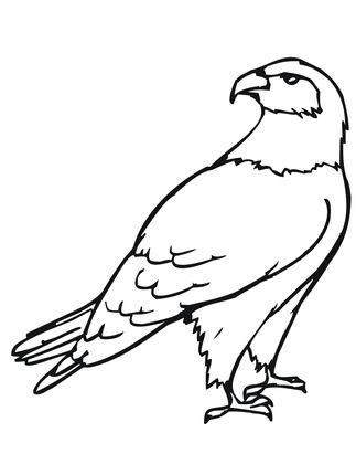 Hawk Bird Coloring Page Bird Coloring Pages Owl Coloring Pages